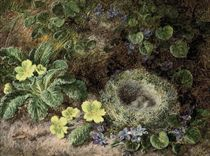 primroses, forget-me-nots and a bird's nest on a mossy bank