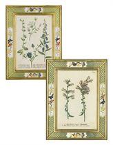 Seven botanical studies from Phytanthoza iconographia