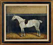 Portrait of a dappled grey horse