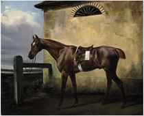 A tethered chestnut horse in a landscape