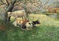 Cattle grazing in an orchard