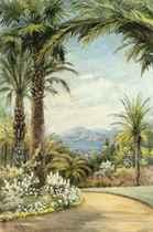 Palms above the Mediterranean coast