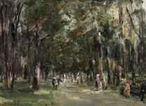 Allee in Tiergarten