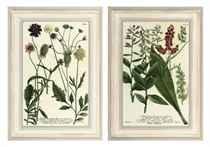 Twelve botanical studies from Phytanthoza iconographia