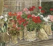 Bags of Geraniums