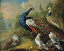 A peacock and other birds in a wooded landscape