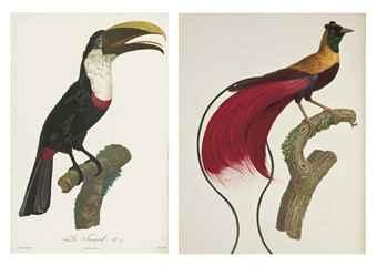 LEVAILLANT, François (1753-1824). Histoire naturelle des oiseaux de paradis et des rolliers, suivie de celle des toucans et des barbus. Paris: Denné et Perlé, [1801-] 1806.