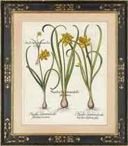 Narcisssus Septentrionalis flo plenoluteo; Narcissus iuncifolius polyanthos albus; Anemone flore multiplici coccineo colore tenuifolia; and Anemone tenuifolia flore purpureo violacea, from Hortus Eystettensis