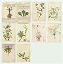 A sketchbook with 22 leaves, bound in vellum, containing 24 studies of plants with discourses on their properties and with sketches for decorative elements