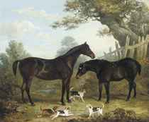 Two chestnut hunters, with puppies playing in the foreground