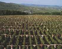 Bourgogne, France 2009