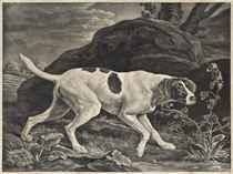 Phillis, a Pointer of Lord Clermonts