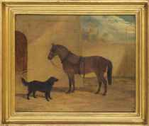 A saddled chestnut hunter and black dog in courtyard