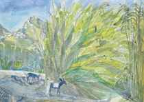 Reeds and Donkeys, Seriphos