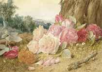 Still life with wild pink roses