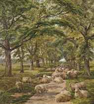 Sheep resting on a tree-lined path