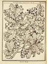 DUHAMEL DU MONCEAU, Henri Louis (1700-1782). Traité des arbres et arbustes qui se cultivent en France en pleine terre. Paris: H.L. Guerin & L.F. Delatour, 1755.