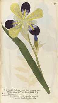 KNIPHOF, Johann Hieronymous (1704-1763). Botanica in originali seu herbarium vivum. Edited by Johann Gottfried Trampe. Halle an der Saale: J.G. Trampe, 1757-1764.