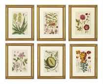 Herbarium Blackwellianum Emendatum et Auctum: twelve plates
