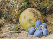 An apple, grapes and a hazelnut on a mossy bank