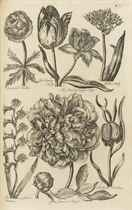 THOMAS HALE (FL C1750) AND SIR JOHN HILL (1716/17-1775)