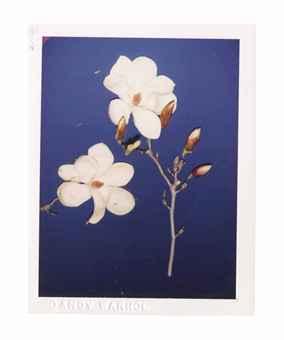Flowers, 1970s