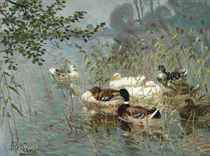 Ducks in the reeds