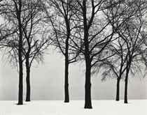 Chicago (Trees at Lake Shore), c. 1950