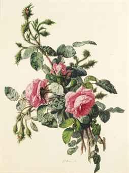 Branche de rosier en fleurs