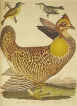 WILSON, Alexander (1766-1813). American Ornithology; or, The natural History of the Birds of the United States. Philadelphia: Robert Carr pour Bradford and Inskeep, 1808-1814.
