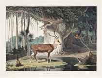 Distant View of Trincomale; The Spotted Antlope; A Maha Modliar and Toddy Gatherer; View between Galle & Mattura; Wild Boar; Water Carrier; The Ferry at Caltura; The Elk; A Gentoo Chitty Man & Woman; The Fishing Cove near Columbo; A Singaleze Man & Woman (Abbey Travel 410, nos. 1-12)