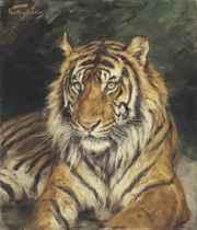 A Reclining Tiger