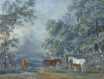 Horses and a foal in an extensive landscape