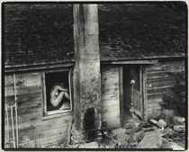Nude in Window, c. 1955