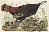 William Home Lizars (1788-1859), after John James Audubon