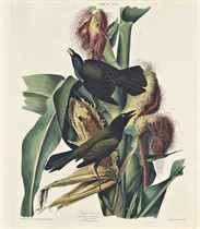 William Home Lizars (1788-1859) after John James Audubon