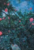 Garden Series No.4