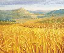 Provence - Among the wheat fields of Bonnieux, Autumn