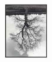Welsh Oaks (#4)