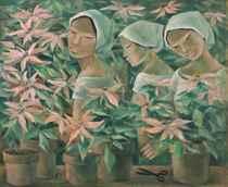 Gathering Poinsettias