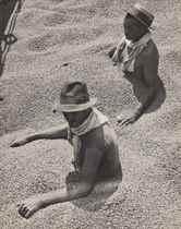 Coffee Tragedy in Brazil, 1932