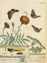 HARRIS, Moses (1730-c1788) The Aurelian: or Natural History