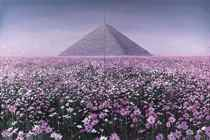 Flowers Blooming - No. 3