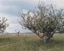 Peach Tree, 2002