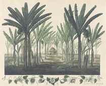 Plantain Trees