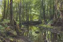 A Stream in the Forest