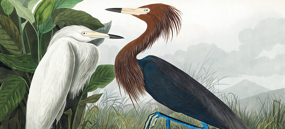 Audubon's The Birds of America