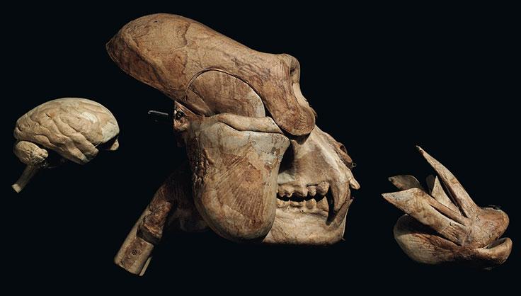 evolution, politics and gorilla warfare | christie's, Skeleton
