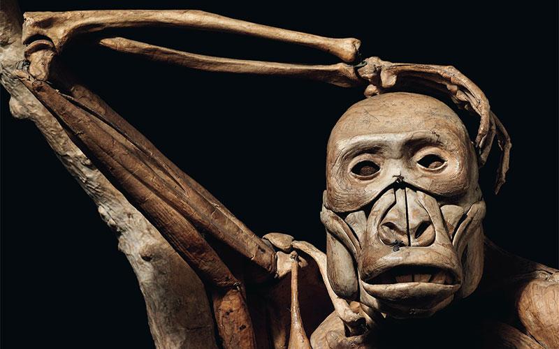 Evolution, politics and gorilla warfare