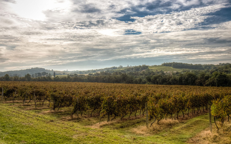 Luxury living Vineyard Estates